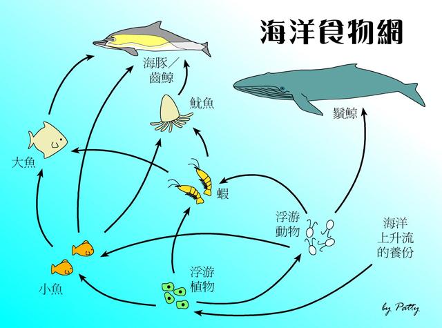 Deep Sea Angler Fish Food Chain